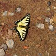 Butterfly On The Sand Two  Art Print