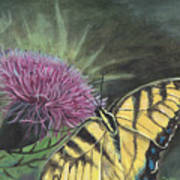 Butterfly On Thistle 2010 Art Print