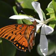 Butterfly On White Art Print