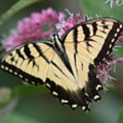 Butterfly Paradise  Art Print