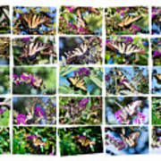 Butterfly Plethora I Art Print