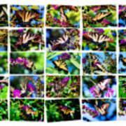 Butterfly Plethora II Art Print