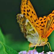 Butterfly Pose Art Print