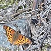 Butterfly Rock Art Print