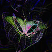 Butterfly Rws Work Number Two Art Print