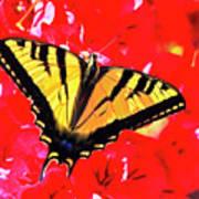 Butterfly Series #11 Art Print