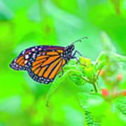 Butterfly Series #13 Art Print