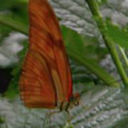 Butterfly Smile Art Print