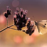 Butterfly Spirit #03 Art Print by Loriental Photography