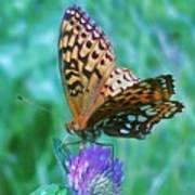 Butterfly Stare Art Print