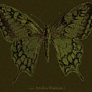 Butterfly Swallow Tail Art Print