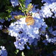 Butterfly Viii Art Print