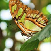 Butterfly Watching Art Print
