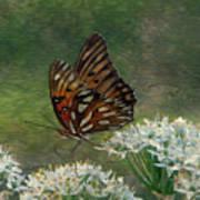Butterfly Waters Art Print
