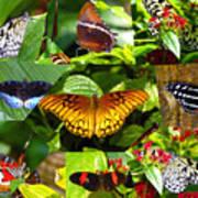 Butterfly Work 10 Art Print