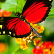Butterfly1 Art Print