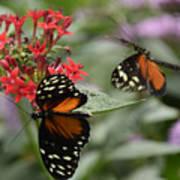 Butterfly2 Art Print