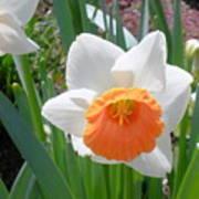 Button Daffodil Art Print