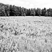 Bw Meadow Art Print