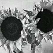 Bw Sunflowers #002 Art Print