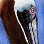 Bwon Pelican Eye Art Print