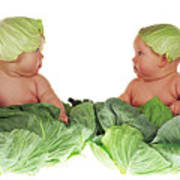 Cabbage Kids Art Print