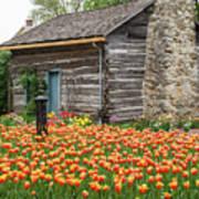 Cabin In The Tulips Art Print
