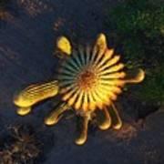 Cactu Sundown Art Print