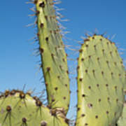 Cactus Against Blue Sky Art Print