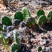 Cactus, Arches National Park Art Print