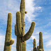 Cactus Arms Art Print