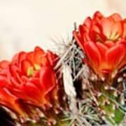 Cactus Bloom 033114m Art Print