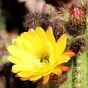 Cactus Blooms Yellow 050214g Art Print