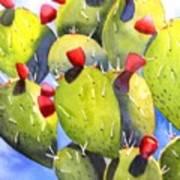 Cactus Blossoms Art Print