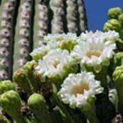 Cactus Budding Art Print