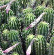 Cactus Drama Art Print