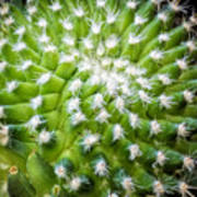 Cactus Feathers Art Print