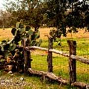 Cactus Fence Line Art Print