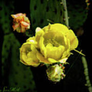 Cactus Flower 07-010 Art Print