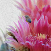 Cactus Flower And A Busy Bee Art Print