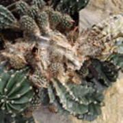 Cactus Fractals Art Print