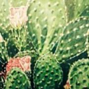 Cactus In Blossom  Art Print