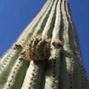 Cactus In The Sky  Art Print