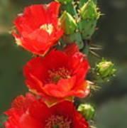 Cactus Red Beauty Art Print