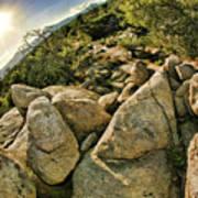 Cactus Rock Art Print