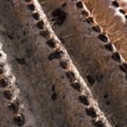 Cactus Spines Art Print