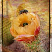 Cactus Spring Beauty W Frame Art Print