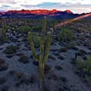 Cactus Sun Beam Art Print