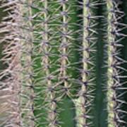 Cactus Thorns Art Print