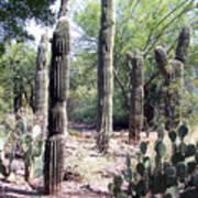 Cactus West Art Print